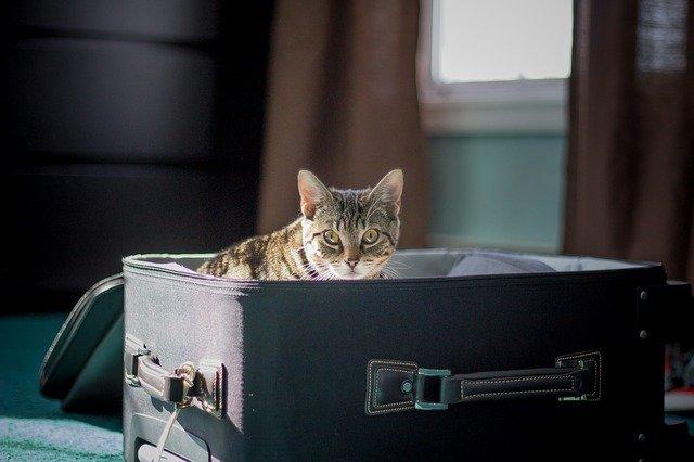 Flugreise Katzen